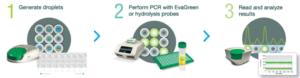 Digital PCR workflow